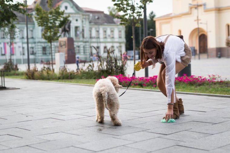 Training Secrets Dog Trainers Won't Tell You for Free