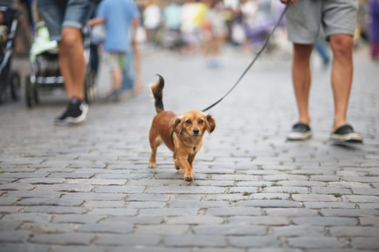 The dog with the owner goes on urban roadway