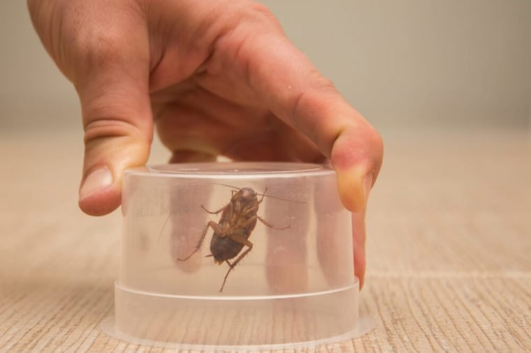 A big brown cockroach in a transparent plastic container hold by man's hand