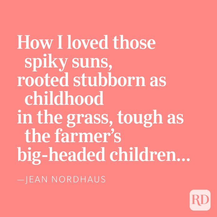 How I loved those spiky suns,rooted stubborn as childhoodin the grass, tough as the farmer'sbig-headed children… —Jean Nordhaus