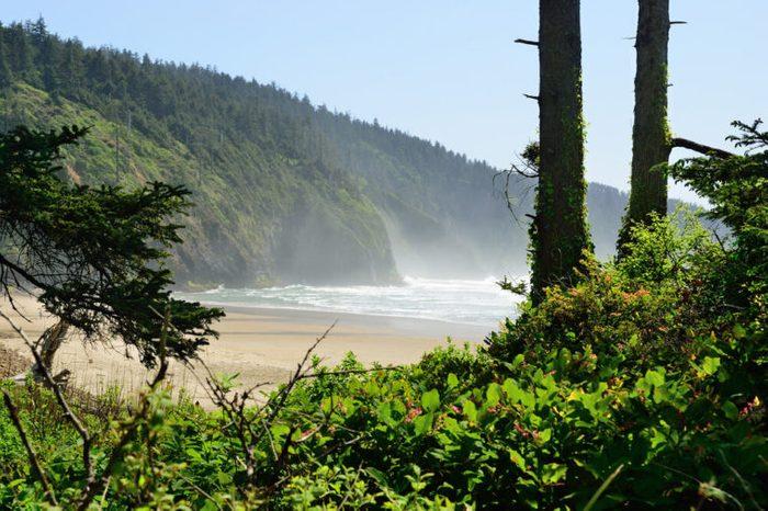 Fog on the Pacific coast. USA. Oregon