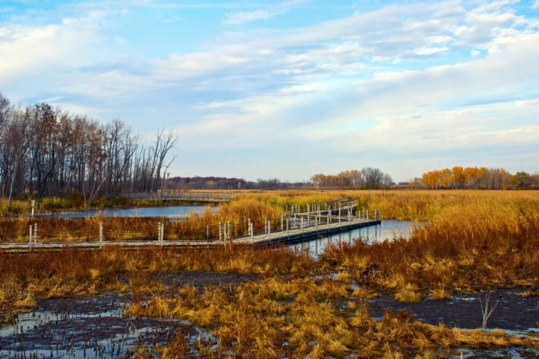 Autumn Landscape with a view of Horicon Marsh, Wisconsin