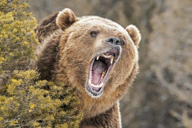 bear_freak accidents