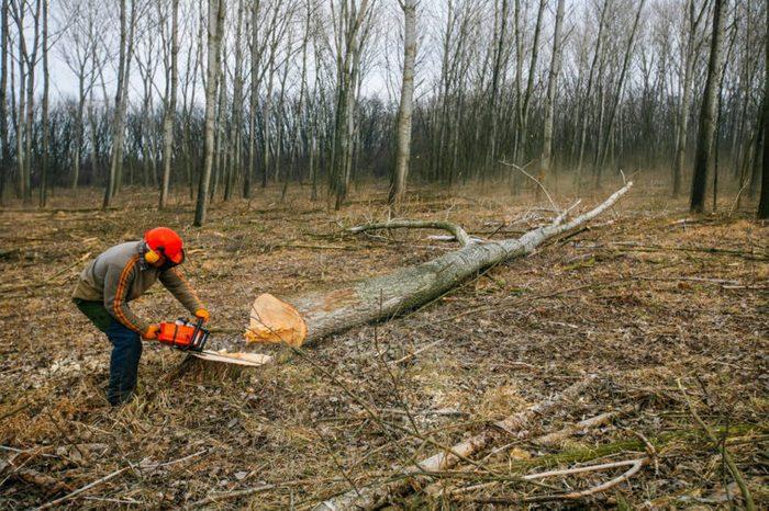 cut down tree_freak accidents