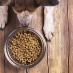 Why Your Pet's Food Bowl Could Be Making You Sick