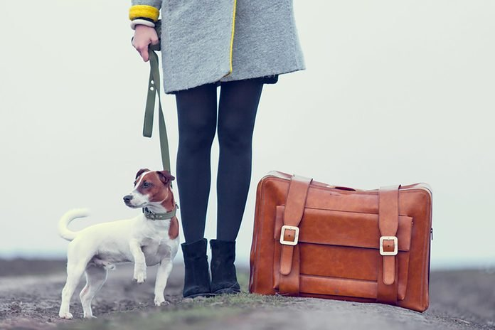 young beautiful woman with suitcase and dog standing on the road