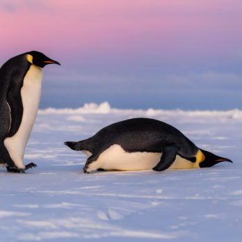 15 Facts (and Pictures!) That Prove Penguins Are the World's Most Adorable Animals