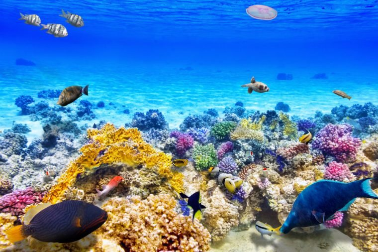 Wonderful and beautiful underwater world with corals and tropical fish.
