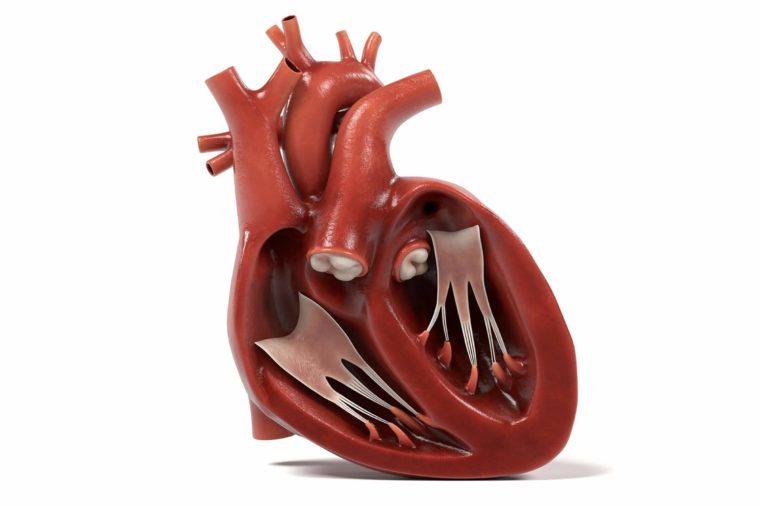 3d renderings of human heart