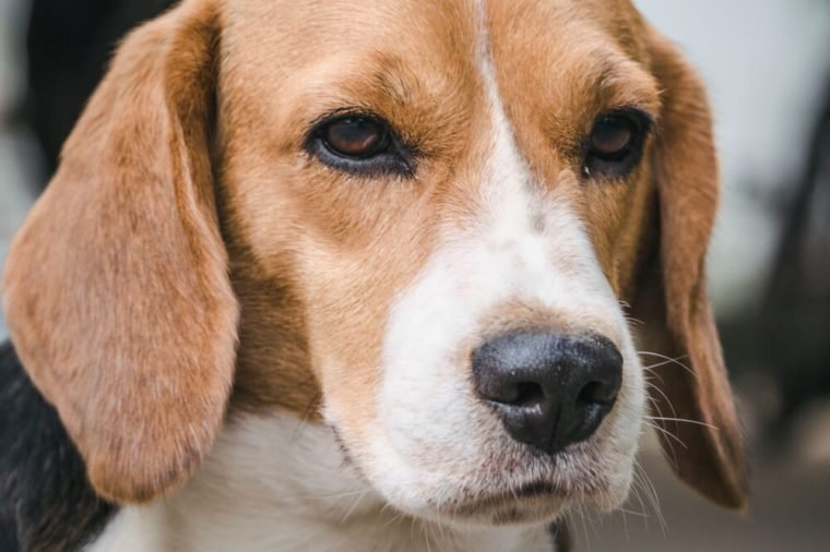 Dog Cancer Signs: 12 to Look Out For | Reader's Digest