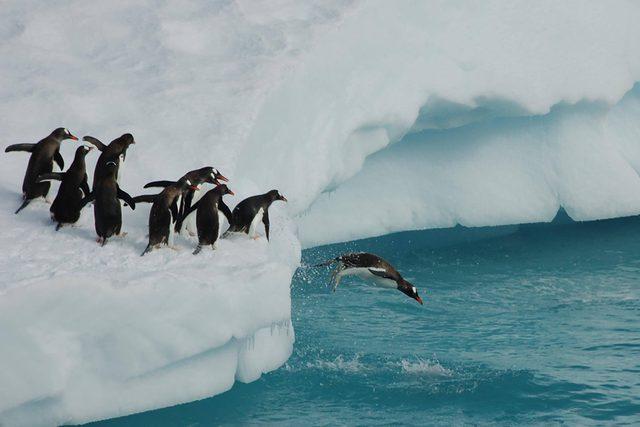 Penguins playing on Iceberg
