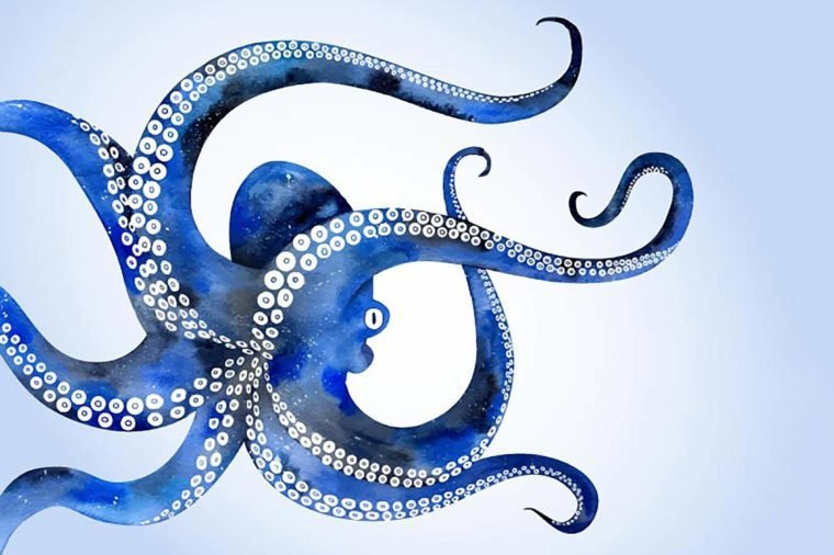 Vector illustration watercolor of hand drawn with octopus. Background with an octopus.Watercolor vector