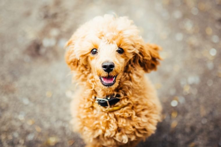 The Smartest Dogs Ranked By Breed Reader S Digest