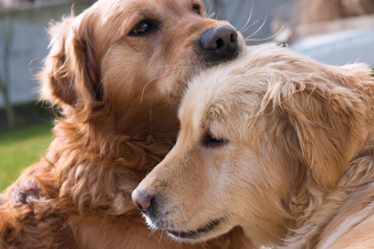 Love between dogs