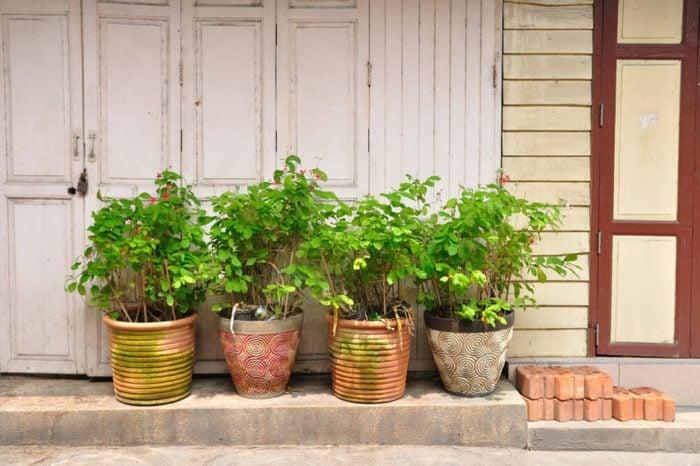 Ancient wooden door and plant-pot.