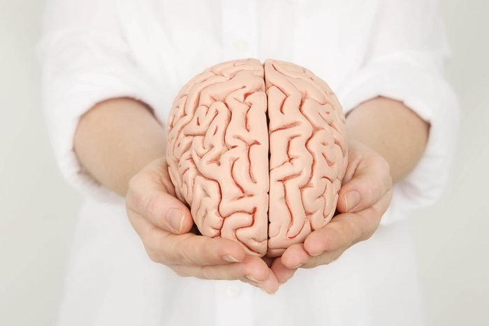 Brain Model in hands