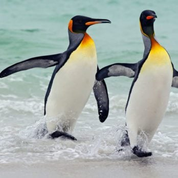 13 Things You Never Knew About Penguins (and How to Help Them)