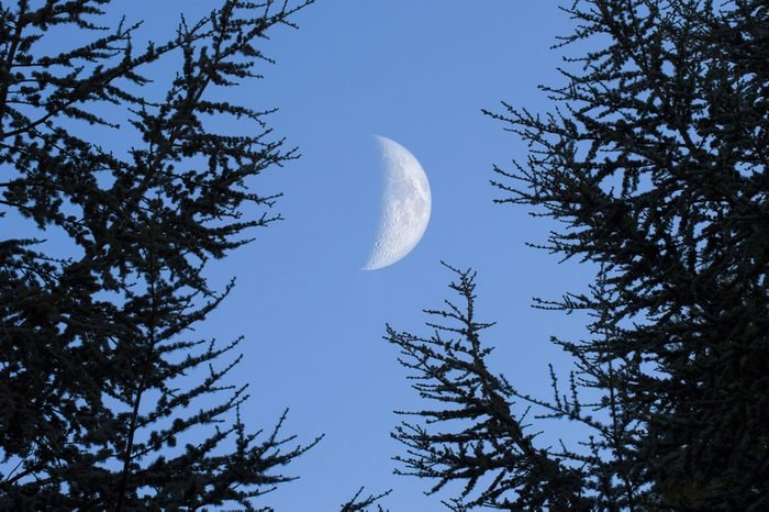 The Moon during the day in the nature between trees