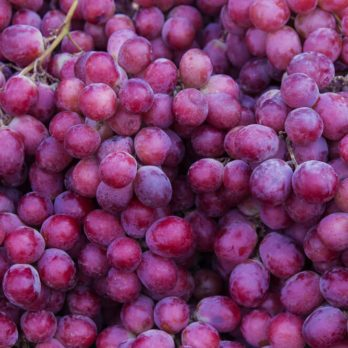 How to Know When to Harvest Grapes