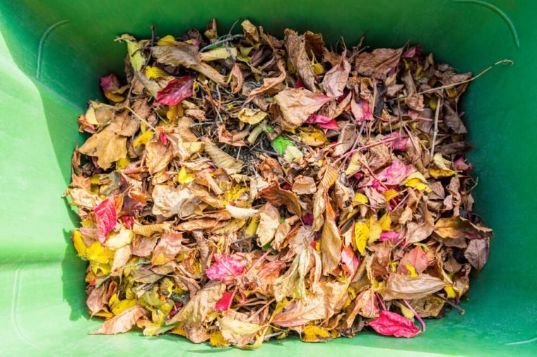 Autumn Leaves in Garbage Can