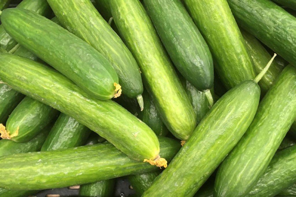 long cucumber harvest. many green cucumbers. cucumbers close up