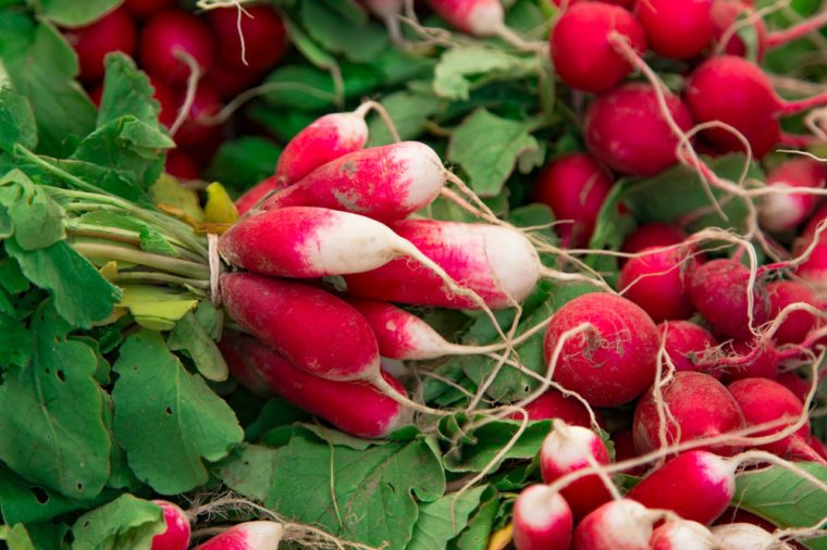 Fresh red white organic radishes with leaves fresh from the garden, for sale at local farmers market