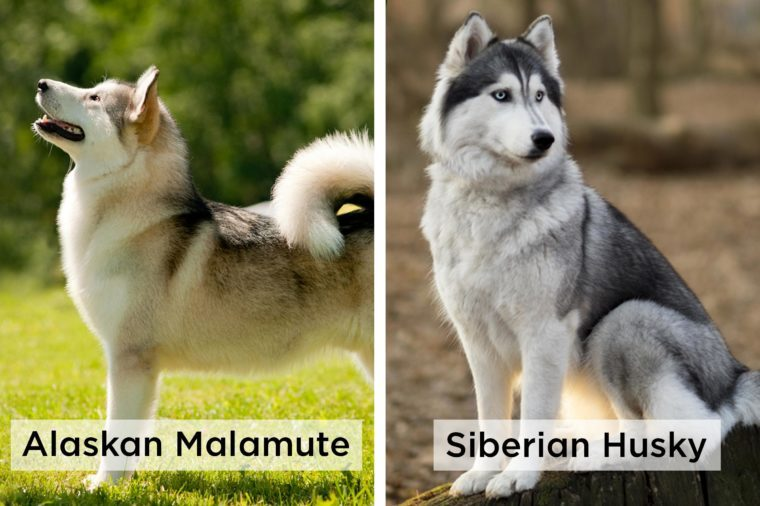 can you tell the difference between these nearly identical dog