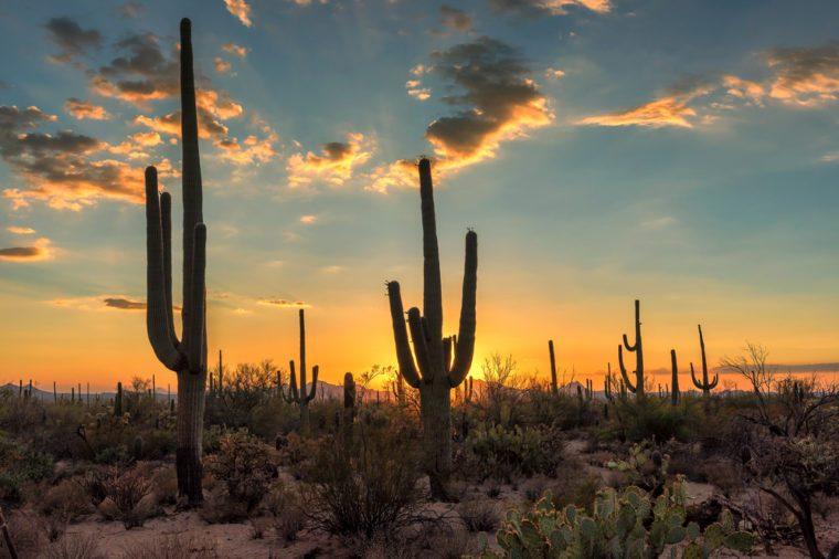 Arizona Saguaro cactus at beautiful sunset.