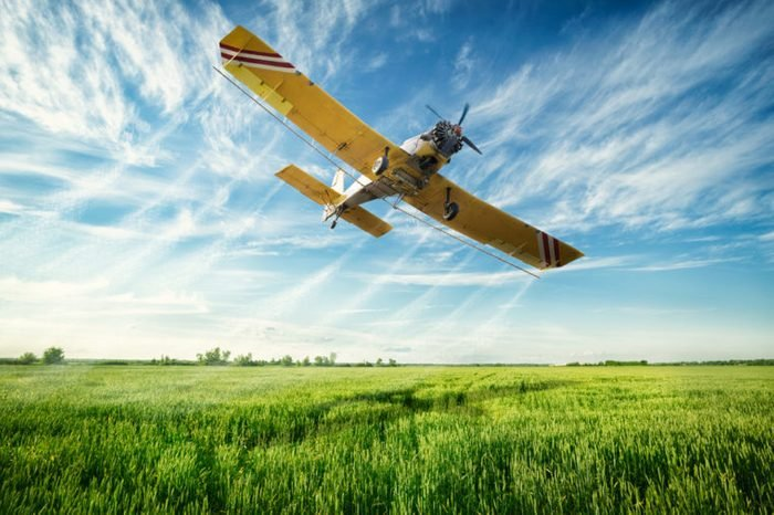 Agriculture, low flying yellow plane sprayed crops in the field