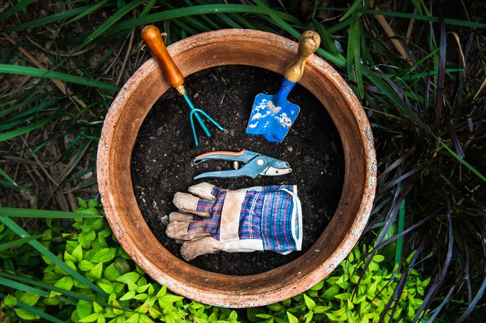 Various garden tools in plant pot