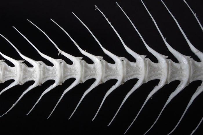 Sea fish white bone closeup