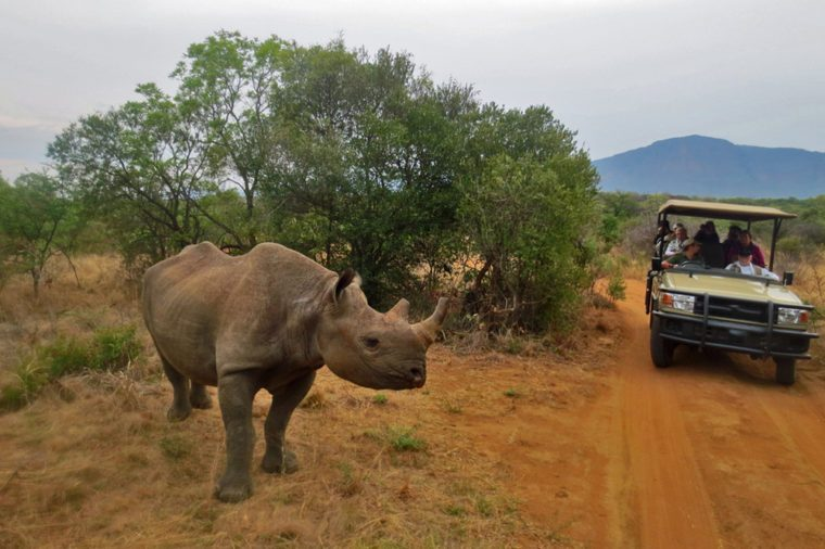 Up close encounter with a black rhino on safari in South Africa.