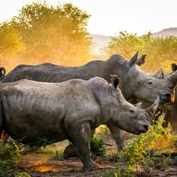 15 Things You Never Knew About Rhinos