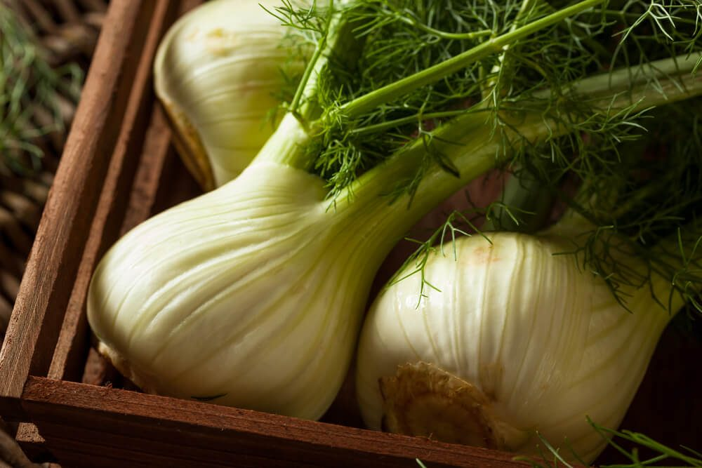 Raw Organic Fennel Bulbs Ready to Cook