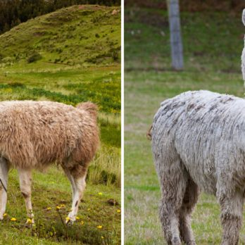 Can You Tell the Difference Between These Nearly Identical Animals?