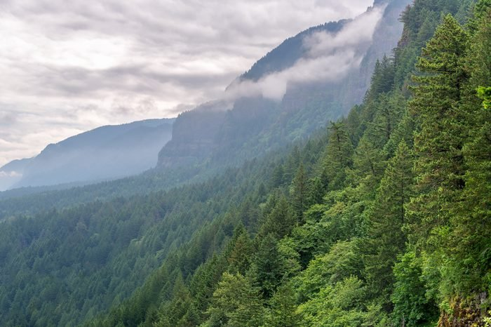 Dense green forest climbing the slopes of the Columbia River Gorge in Oregon
