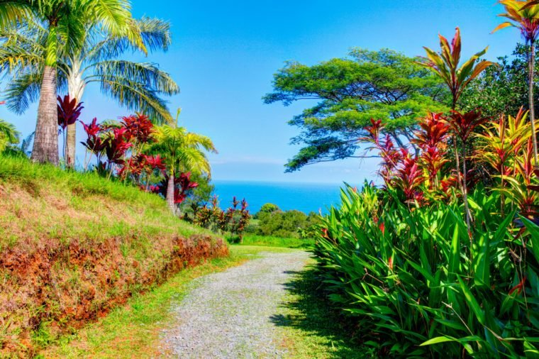 Palms in tropical garden with flowers and palm trees overlooking the ocean with blue sky. Garden Of Eden, Maui Hawaii