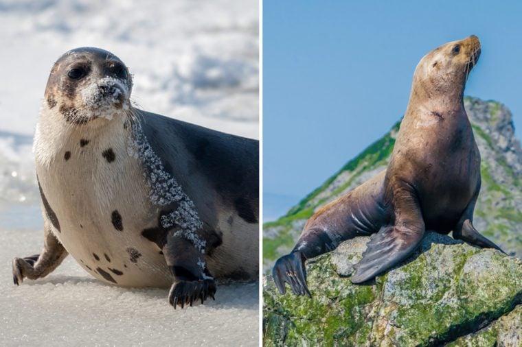 Seal-Vs-SeaLion