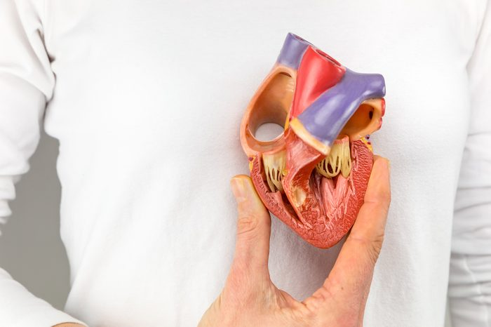 Female hand showing plastic heart model in front of body