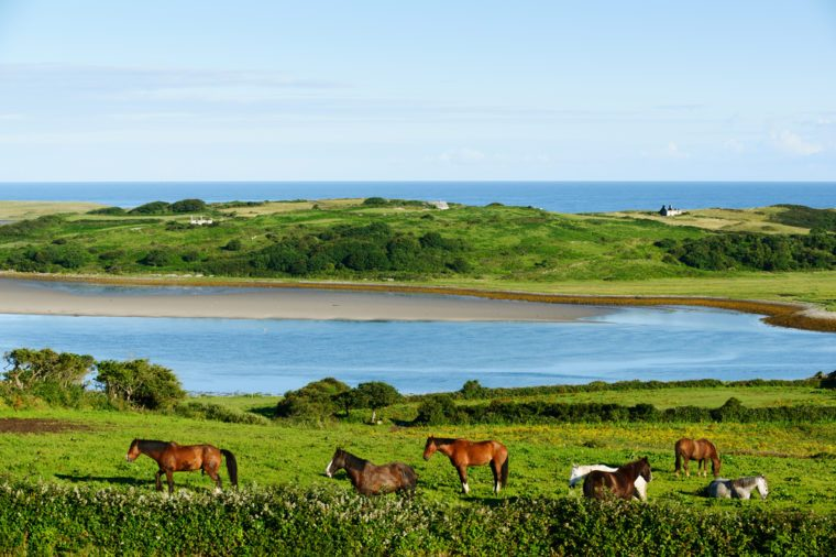 Beautiful landscape with horses in County Sligo, Ireland