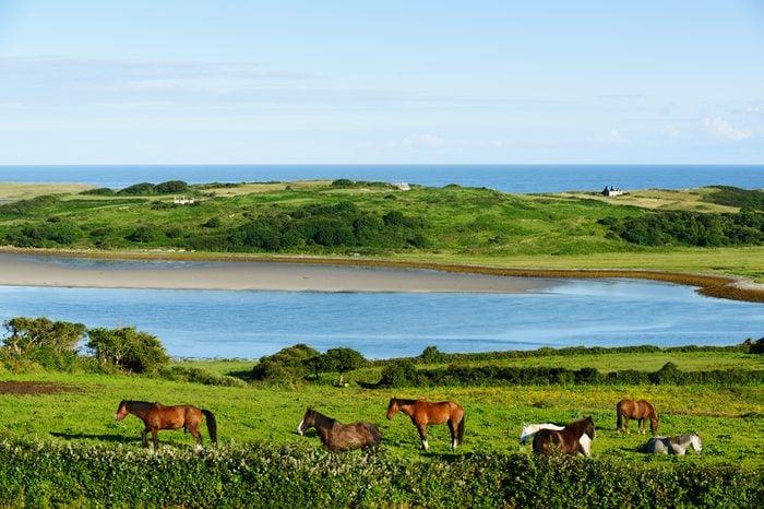 Beautiful landscape with horses in County Sligo, Ireland