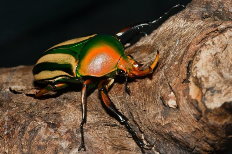 beetle_weird experiments