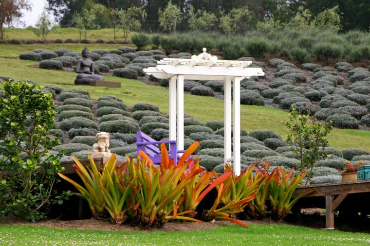 Beautiful Gardens Alii Kula Lavender Farm Maui Hawaii
