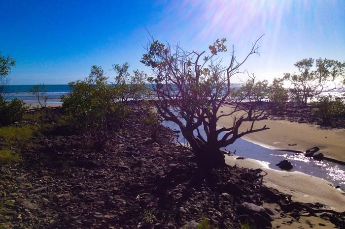 Beach of Cape Tribulation, Australia