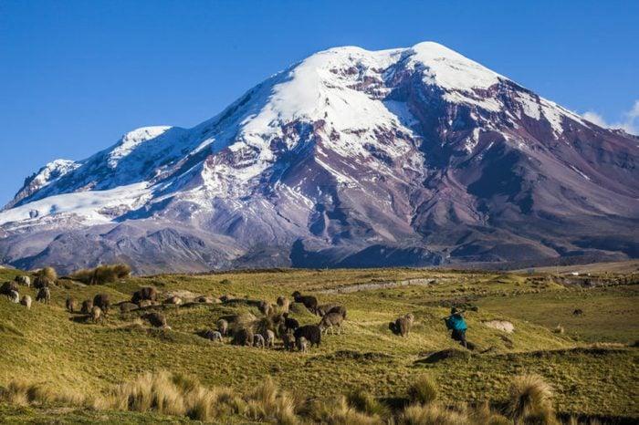 Chimborazo volcano and sheep on the moor, Andes, Ecuador