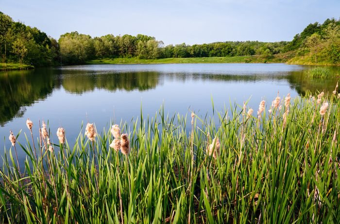 River with Flowers at Cuyahoga Valley National Park