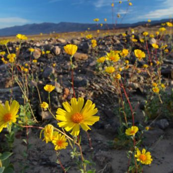 10 Stunning Photos of National Parks in Full Bloom