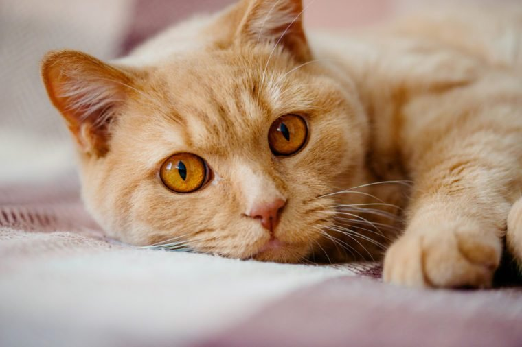 Cat Cancer Signs: 11 to Look Out For | Reader's Digest