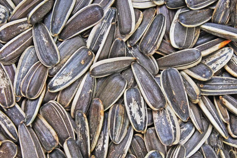 Sunflower seeds. Sunflower seed texture as background. Black and white roasted organic seeds. Food photography in studio.