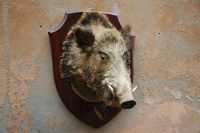 Views and building seen in lovely Orvieto Italy-boar's head on wall along street
